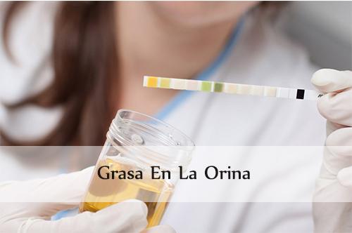 Grasa En La Orina